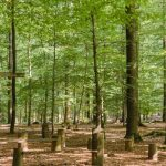 Waldbestattung im FriedWald Kisdorf
