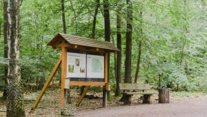 Informationstafel im FriedWald Kirchheimbolanden