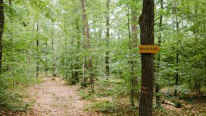 Waldweg im FriedWald Kirchheimbolanden
