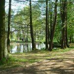 Waldbestattung im FriedWald Markersdorf