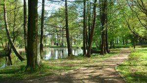 FriedWald Markersdorf, Schlosspark