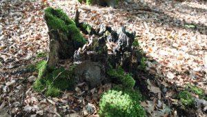 FriedWald Meroder Wald