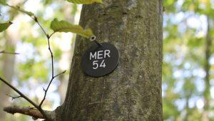 FriedWald Meroder Wald, Bestattungsbaum
