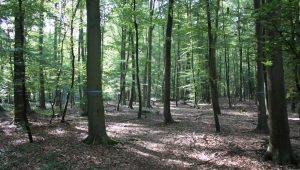 FriedWald Meroder Wald, Waldbild
