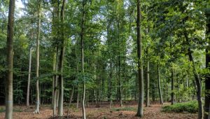 FriedWald Goch-Tannenbusch