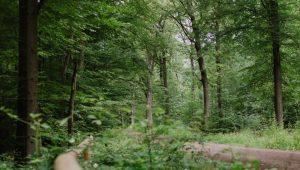 Waldweg im FriedWald Dietzenbach