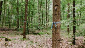 Bäume im FriedWald Dudenhofen