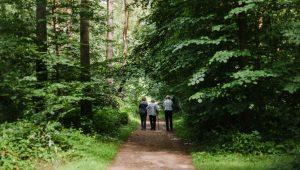 Waldweg im FriedWald Dudenhofen