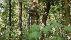 Freier Baum im FriedWald Freyburg