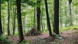 Waldbild im FriedWald Gelnhausen