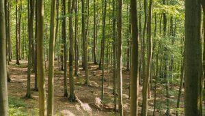 Waldbild im FriedWald Grevesmühlen