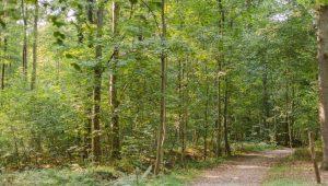 Waldweg im FriedWald Grevesmühlen