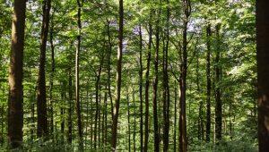 Waldbild, FriedWald Herborn