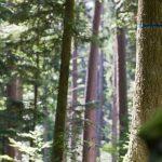 Waldbestattung im FriedWald Michelstadt