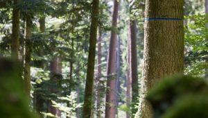 FriedWald Michelstadt, Bäume