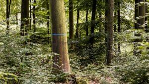 FriedWald Hirschwiese in Taunusstein