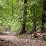 Waldbestattung im FriedWald Taunusstein