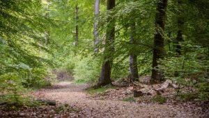 Waldweg im FriedWald Taunusstein