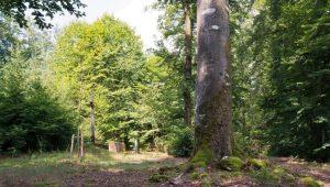 FriedWald Pappenheim, Andachtsplatz mit frisch gesetztem Baum