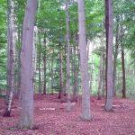 Waldbestattung im FriedWald Waldenburg