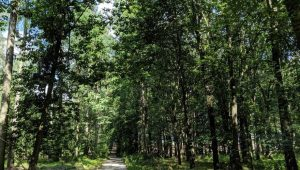Waldweg im FriedWald Waldenburg