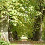 Waldbestattung im FriedWald Rügen