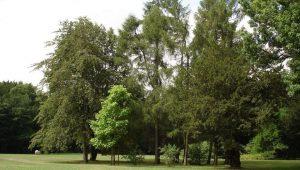 Bäume im FriedWald Rügen