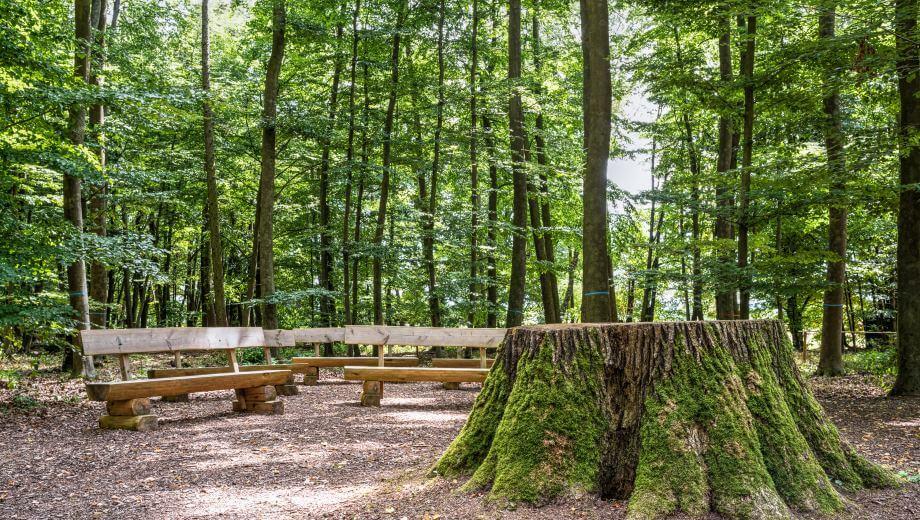 Andachtsplatz mit Baumstumpf | Quelle: FriedWald Lich