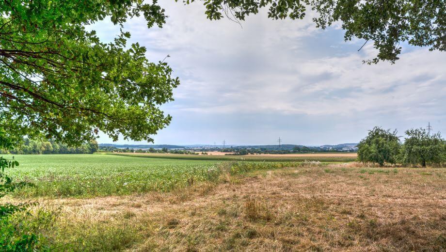 Ausblick am Waldrand | Quelle: FriedWald Lich