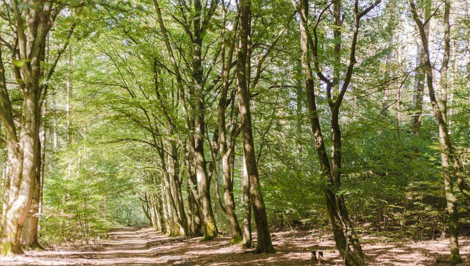 Hauptweg | Quelle: FriedWald Lüneburger Heide