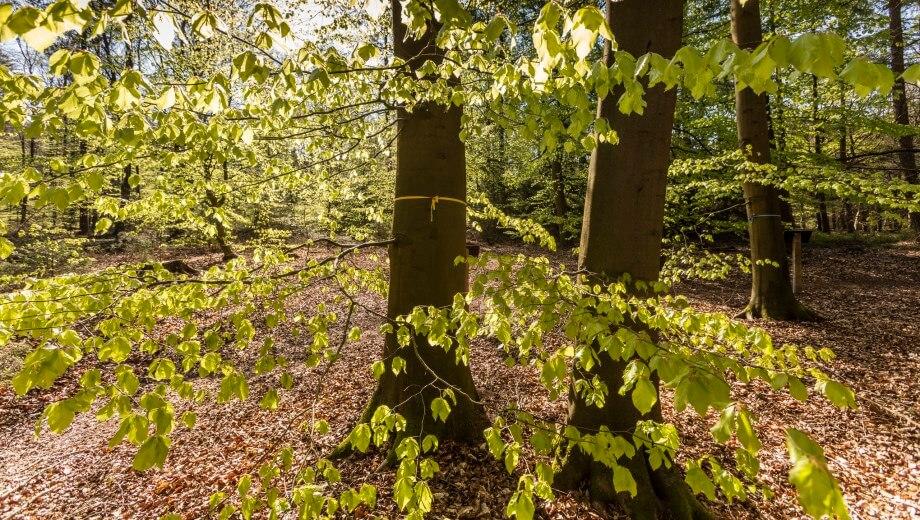Freier Bestattungsbaum | Quelle: FriedWald Bremervörde
