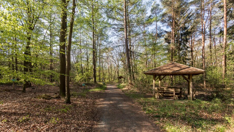 Waldweg | Quelle: FriedWald Bremervörde