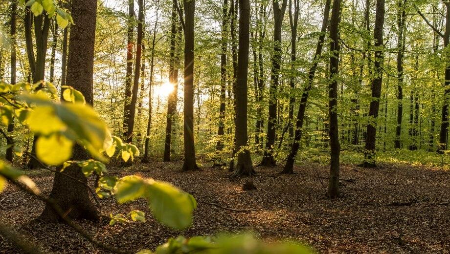 Waldbild | Quelle: FriedWald Buxtehude