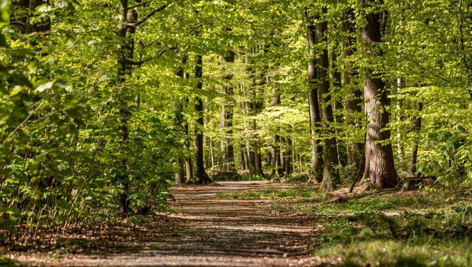 Waldweg | Quelle: FriedWald Buxtehude