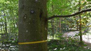 Freier Baum | Quelle: FriedWald Duttenstein