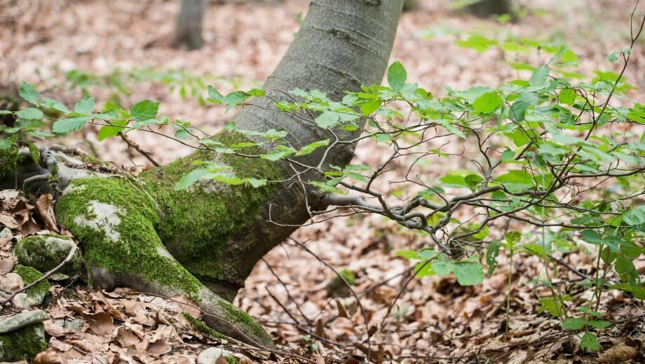 Baum | Quelle: FriedWald Bad Berka
