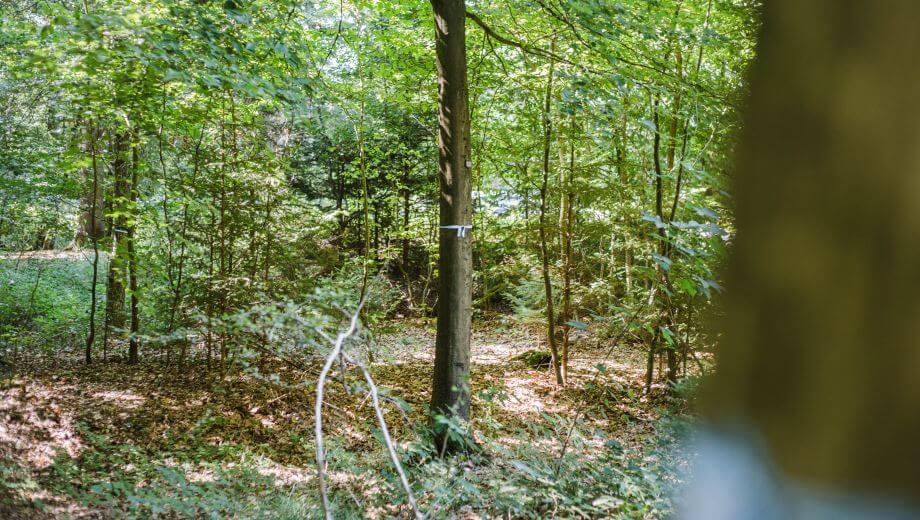 Freier Baum | Quelle: FriedWald Bramsche