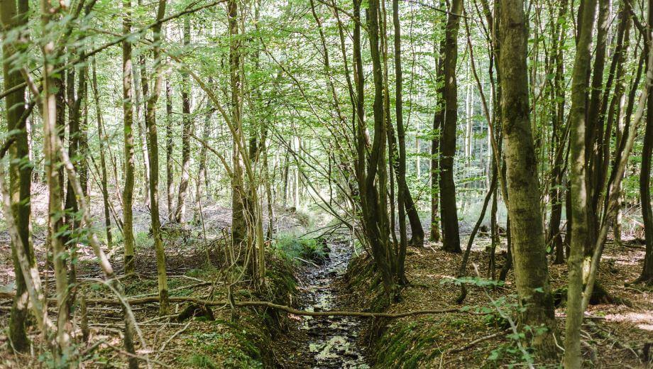 Waldbild | Quelle: FriedWald Bramsche