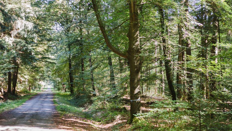 Waldweg | Quelle: FriedWald Bramsche