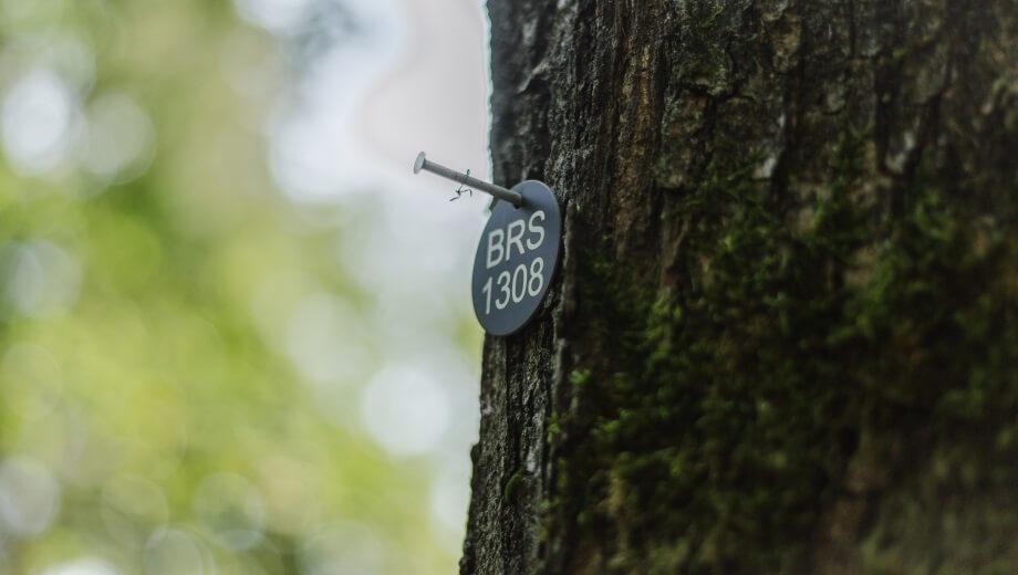 Waldspaziergang im FriedWald