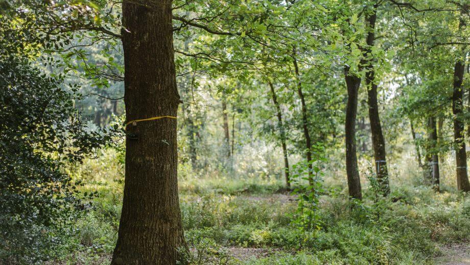 Freier Baum | Quelle: FriedWald Bremer Schweiz
