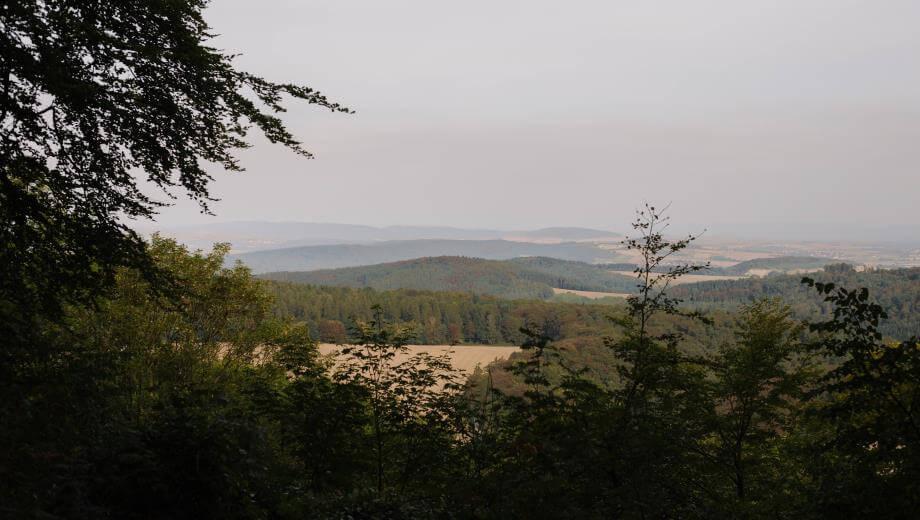 Ausblick vom Waldrand | Quelle: FriedWald Burg Plesse