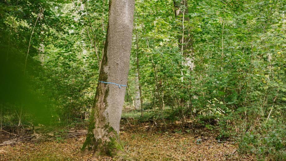 freier Baum | Quelle: FriedWald Burg Plesse