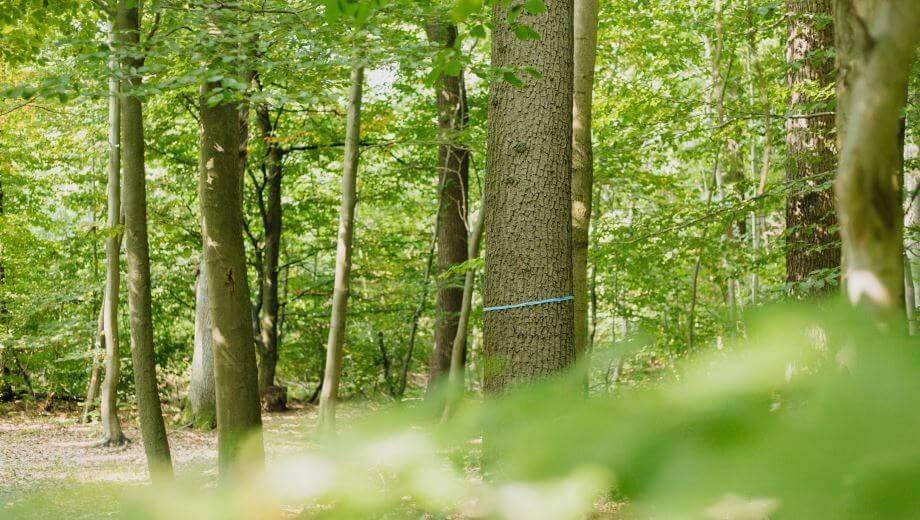 Bestattungsbaum | Quelle: FriedWald Elm