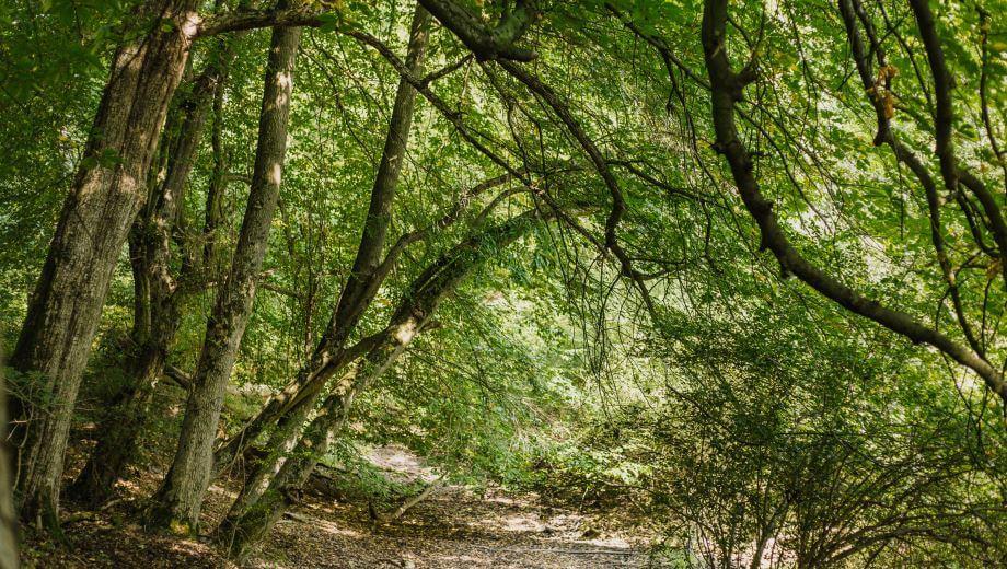 Waldbild | Quelle: FriedWald Elm