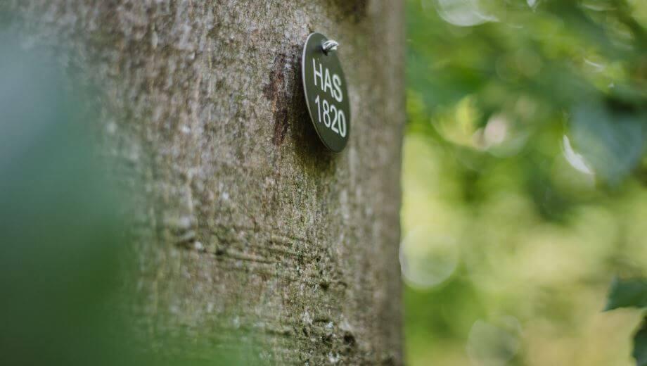 Bestattungsbaum | Quelle: FriedWald Hasbruch