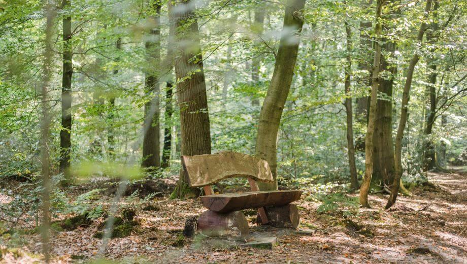Sitzbank | Quelle: FriedWald Hasbruch