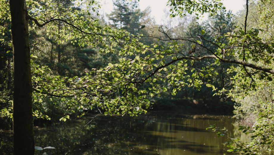 Teich | Quelle: FriedWald Hasbruch