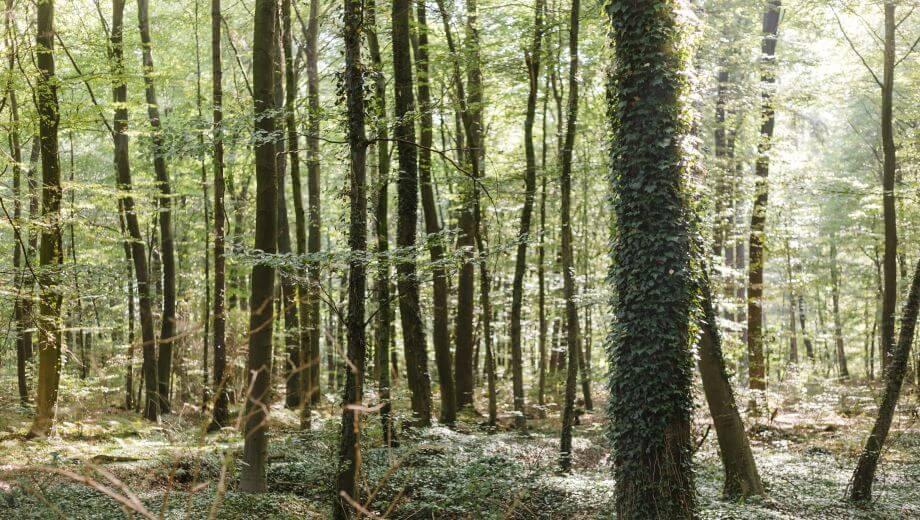 Waldbild | Quelle: FriedWald Hasbruch