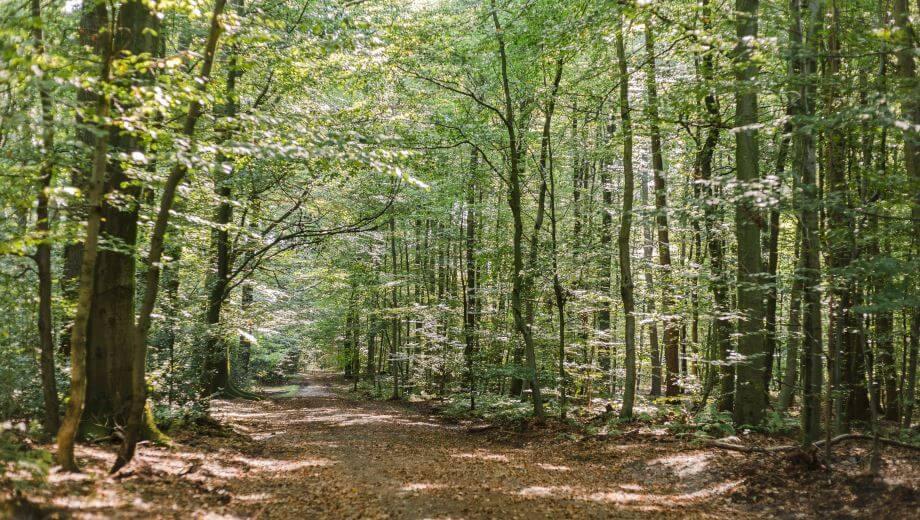 Waldweg | Quelle: FriedWald Hasbruch